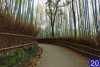 جنگل بامبو (کیوتو، ژاپن) | 20 میشم