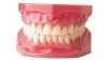 دانلود جزوه مرفولوژی دندان | 20 میشم